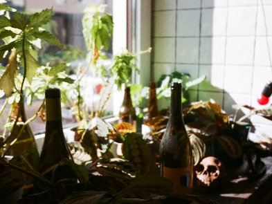 5 мобильных приложений для любителей вина