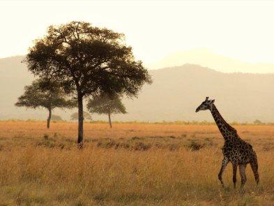 ІТ-компанії Африки: прогрес невблаганний