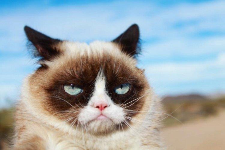Сердитый кот/Grumpy Cat (2012 год)