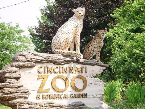 Пандемия коронавируса вынудила американские зоопарки временно перейти в онлайн