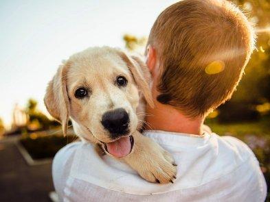Українці розробили унікальний мобільний додаток для догляду за домашніми тваринами