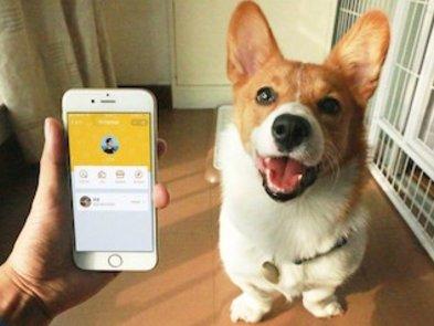 В Дніпрі студенти SoftServe IT Academy розробили платформу для притулку тварин